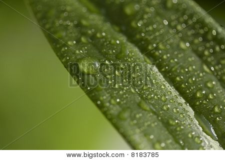 Leaf With Waterdrops And Bokeh
