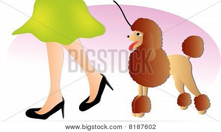 poodle and girl´s leg