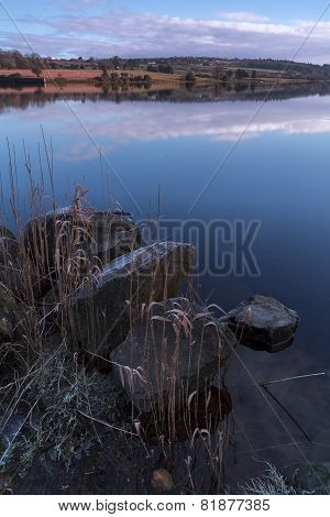 ice covered stones and plants on lakes edge