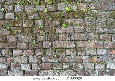 Background Of A Brick Wall With Moss And Weeds