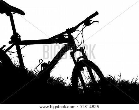 Biking in nature