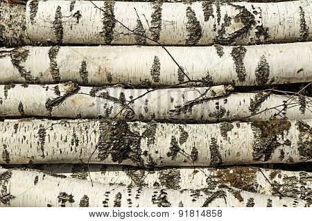 the birch log.