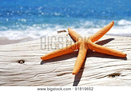 closeup of an orange seastar on an old washed-out tree trunk in the beach, with a bright blue sea in the background
