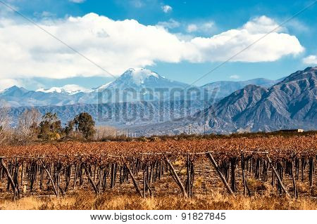 Volcano Aconcagua And Vineyard, Argentine Province Of Mendoza