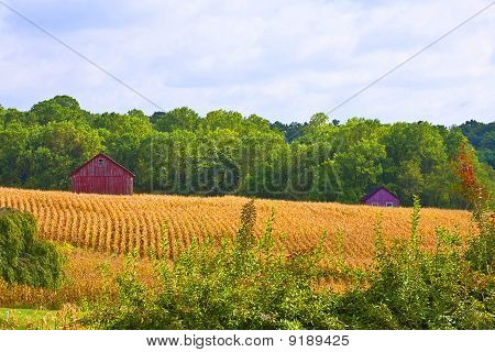 Country Red Barns