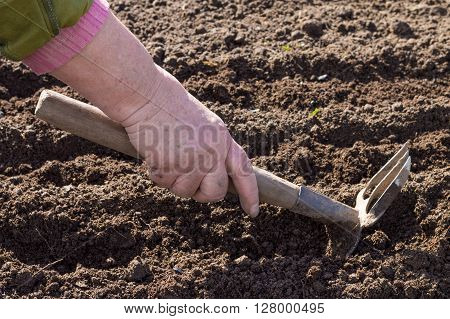 Loosening the soil with hand rakes in the garden