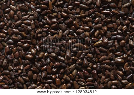 beans of cassia tora, chinese coffee beans macro