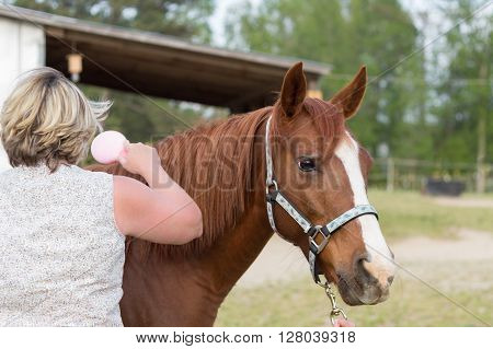 older Arabian brown and white mature horse in pasture being brushed by woman near stable farm barn on ranch