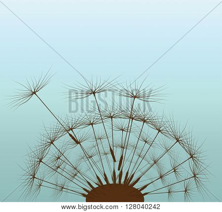 Dandelion for your design, dandelion background, plant