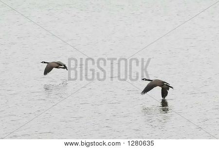 Birds Over Lake