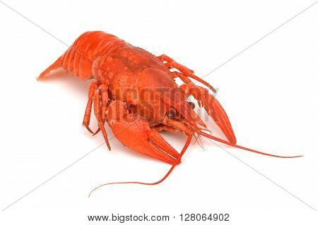 Boiled crawfish. Red crayfish. Crayfish. Crayfish isolated. Hot crawfish. Lobster.