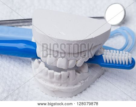 Oral hygiene health concept. Closeup blue toothbrush mirror and tongue cleaner with dental gypsum model