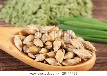 Macro closeup of barley grain on wooden spoon and young powder barley with grass in background healthy nutrition and lifestyle body detox