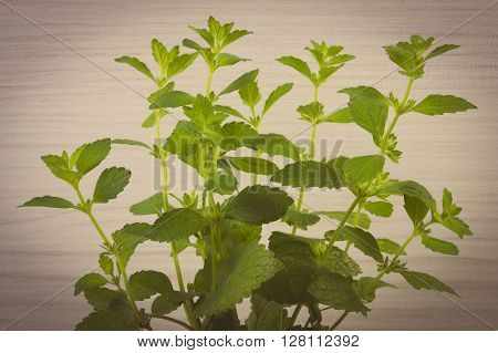 Vintage photo Fresh green lemon balm on wooden background sedative herbs concept for healthy nutrition and herbalism