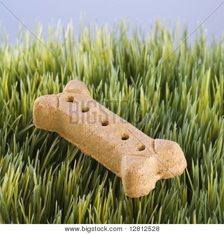 Studio shot of a dog treat laying in grass.