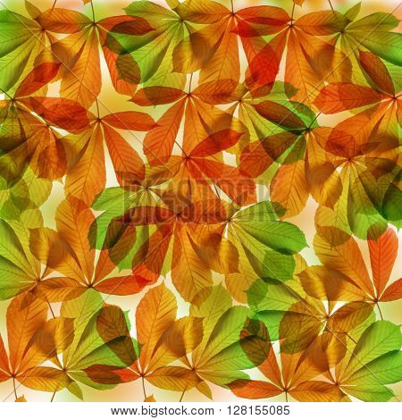 Background from autumn leaves of chestnut tree (Aesculus hippocastanum)