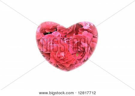 A roses in a heart on white background.