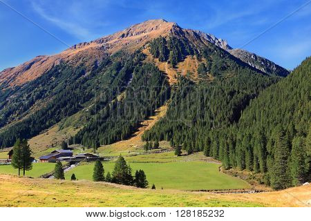 Sunny day in the Austrian Alps. Green meadows in the valley and coniferous forests on the hills