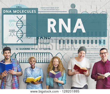 RNA Ribonucleic Physical Molecule Evolution Concept