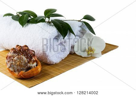 Spa concept with seashell isolated on white. Spa. Spa treatment. Spa concept. Spa massage