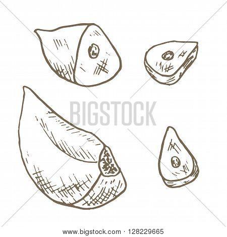 Garlic clove set. Sketch garlic clove sliced. Hand drawn garlic clove and slice. Vector garlic clove illustration. Cut organik vegetable set. Vegetarian and vegan food.