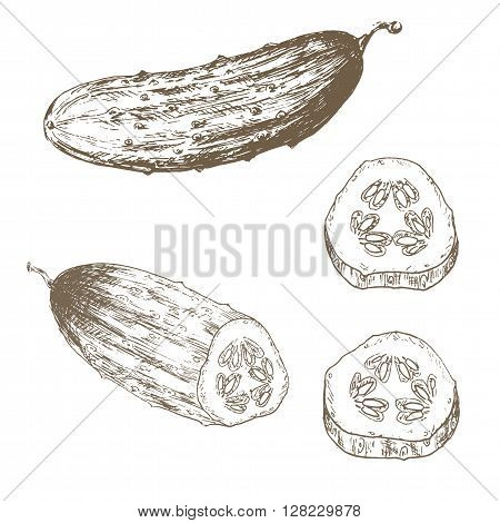 Cucumber slice set. Sketch cucumber slice. Hand drawn cucumber slice and slice. Vector cucumber slice illustration. Cut organik vegetable set. Vegetarian and vegan food.