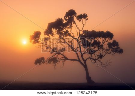 Sun rises over a misty Australian rural scene