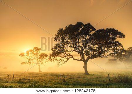 Rural sunrise on a misty morning