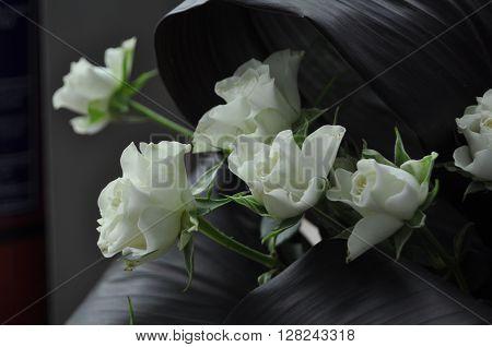 White Rose - symbolizes fidelity and probity