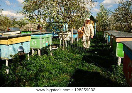 Beekeeper On Apiary