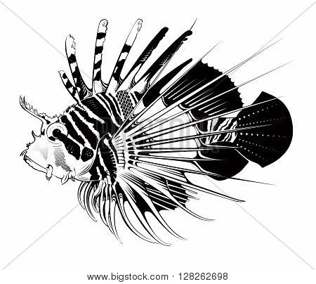 Tropical fish. Vector engraving illustration. Marinelife. Underwater