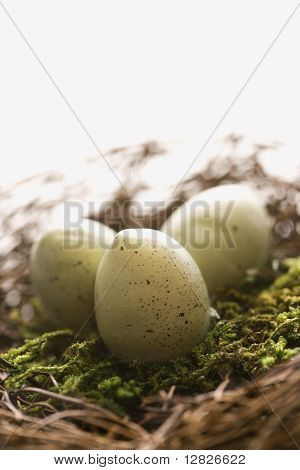 Studio still life of bird's nest with three speckled eggs.