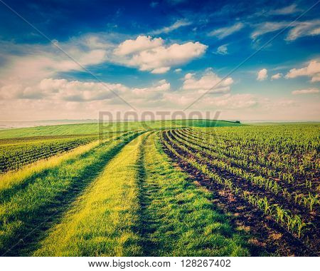 Vintage retro effect filtered hipster style image of rolling fields of Moravia, Czech Republic