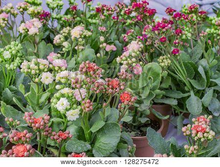 Decorative Green Plants