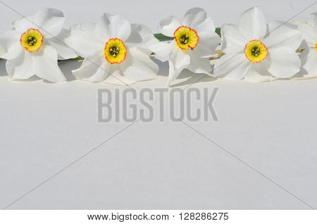 Bouquet of daffodils on a white background