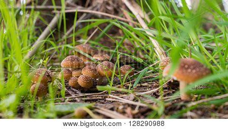 single mushrooms toadstools wild forest fungi Small fungi Single Fungi