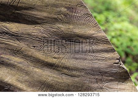 Closeup Wormhole In Wooden
