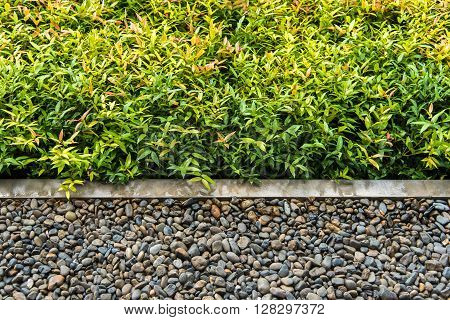 Concrete Edge Seperate Between Shrub And Pebble