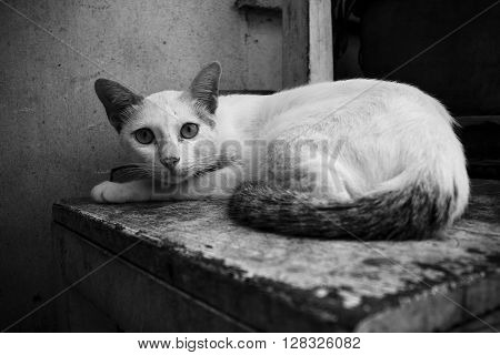 Stray cat in black and white shot.