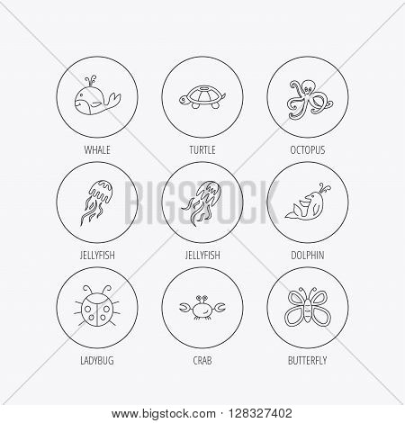 Octopus, turtle and dolphin icons. Jellyfish, whale and ladybug linear signs. Crab, butterfly flat line icons. Linear colored in circle edge icons.