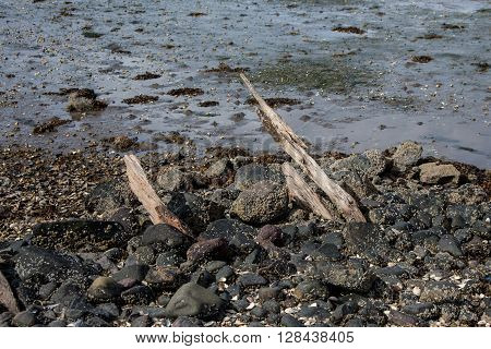 Wooden remains of an old wreck in Scotland