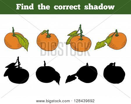 Find The Correct Shadow. Vector Color Set Of Orange Fruits