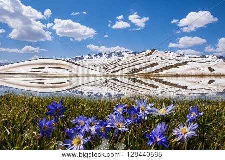 endemic flower species.mountain peak in spring.reflections and spectacular views of the mountains.