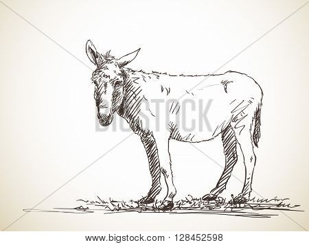 Sketch of donkey Hand drawn illustration