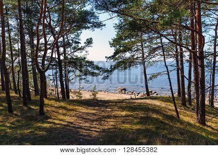 Dark forest near baltic sea in Latvia