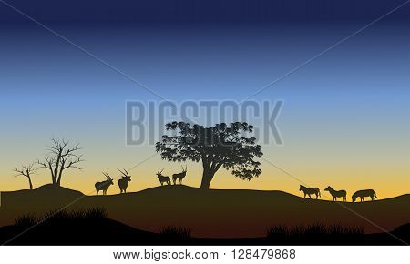 Scenery at morning with antelope and zebra in the hills