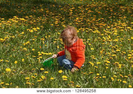 Young boy exploring nature in a meadow. Closeup portrait