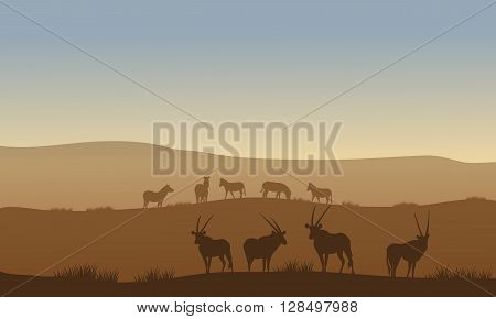 Antelope and zebra on the hills with brown backgrounds