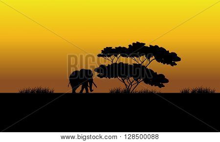 One elephant silhouette in the fields at the sunset