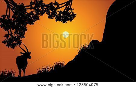 Single antelope silhouette scenery at the sunset